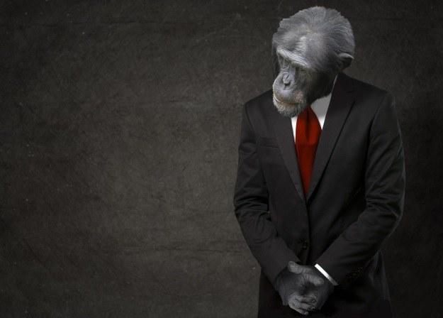 Czy skrzyżowanie człowieka z małpą jest możliwe? /123RF/PICSEL