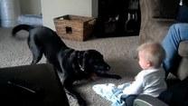 Czy szczekanie psa może bawić? Ten maluch coś o tym wie
