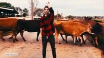 Czy ten imponujący taniec zrobi wrażenie na krowach?