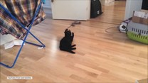 Czy ten kot myśli, że jest psem?