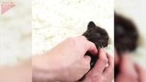 Czy to najmniejszy pies świata?