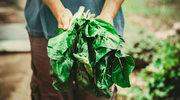 Czy warto przejść na wegetarianizm?