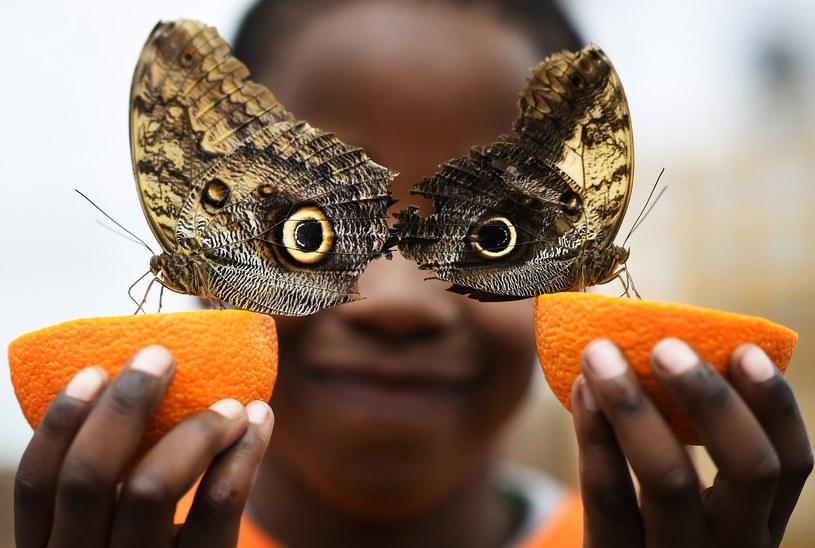 Czyje to oczy? /Dylan Martinez/Reuters /FORUM
