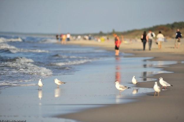 Czysta i szeroka plaża to jeden z głównych atutów Krynicy Morskiej /Reporter