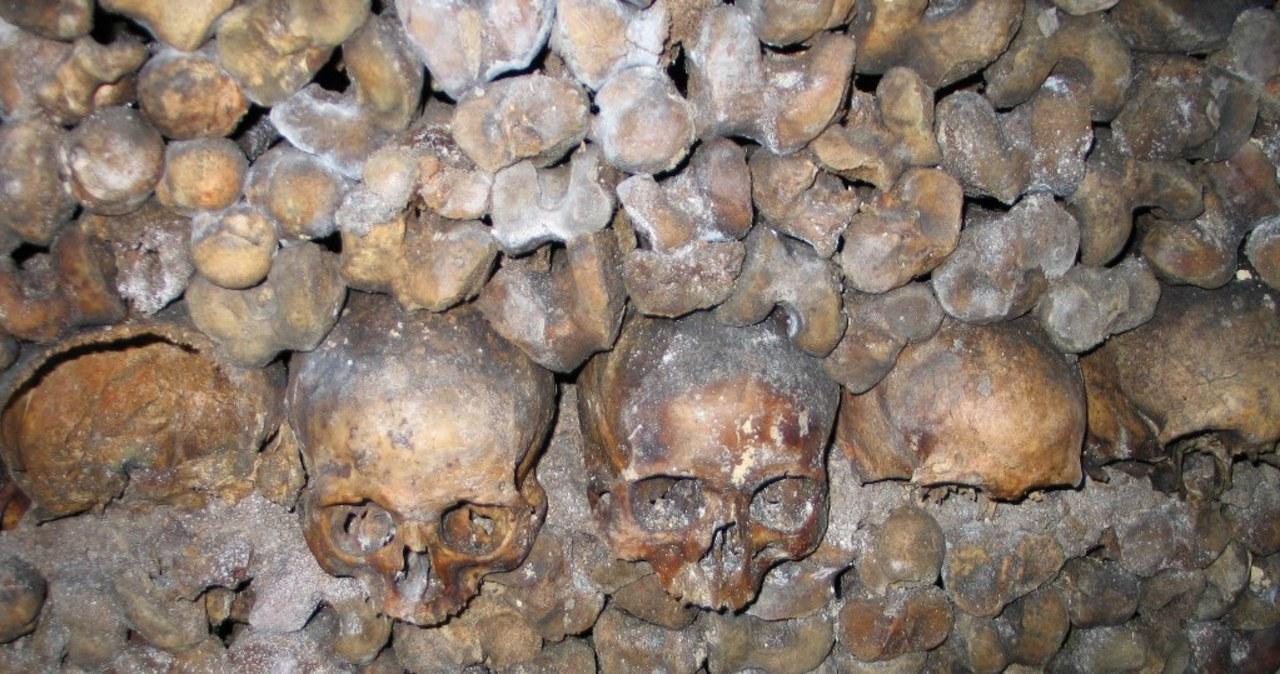 Darmowy nocleg wśród milionów czaszek w paryskich katakumbach