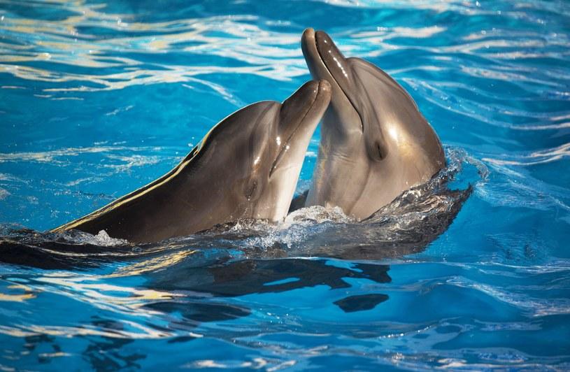 Delfiny /123/RF PICSEL