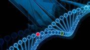 Dieta zapisana w DNA
