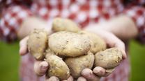Dlaczego warto jeść ziemniaki
