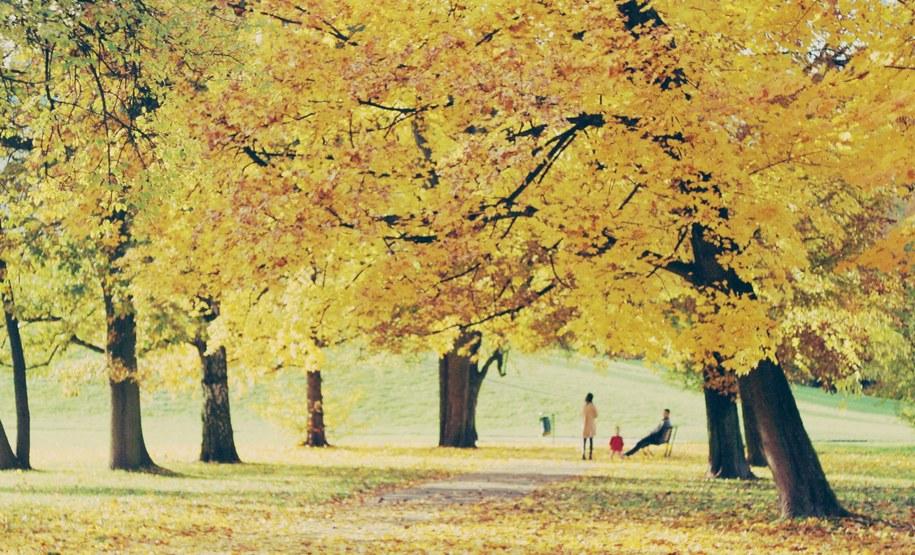 Do czwartku możemy cieszyć się złotą polską jesienią /Maciej Nycz /RMF FM