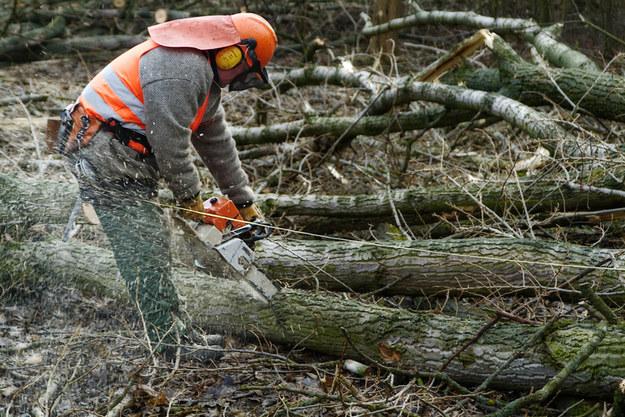 Do obowiązków pracowników leśnych należy czyszczenie lasu, a więc wycinanie drzew, złamanych gałęzi i konarów /© Panthermedia