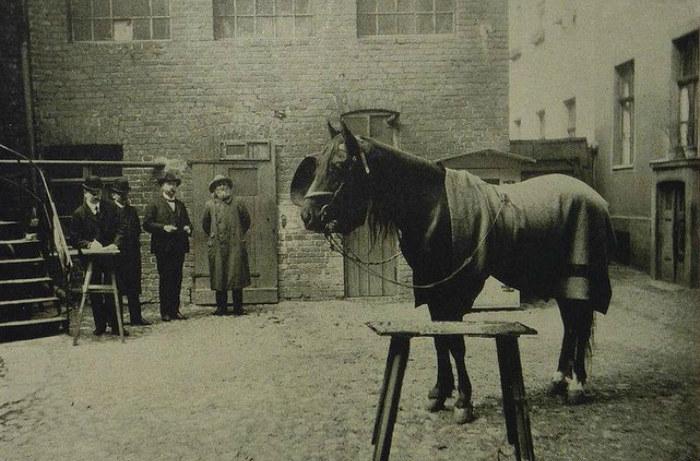Do zbadania sprawy konia matematyka powołano aż dwie komisje /materiały prasowe