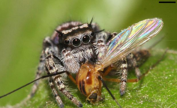 Doceń pająka. Szczególnie, gdy nie cierpisz owadów...
