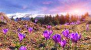 Dolina Chochołowska - jedno z najpiękniejszych miejsc w Tatrach