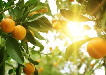 Domowe kosmetyki pachnące pomarańczami