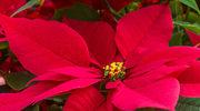 Domowe kwiaty piękne nawet zimą