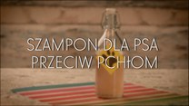 Domowy szampon dla psa przeciw pchłom
