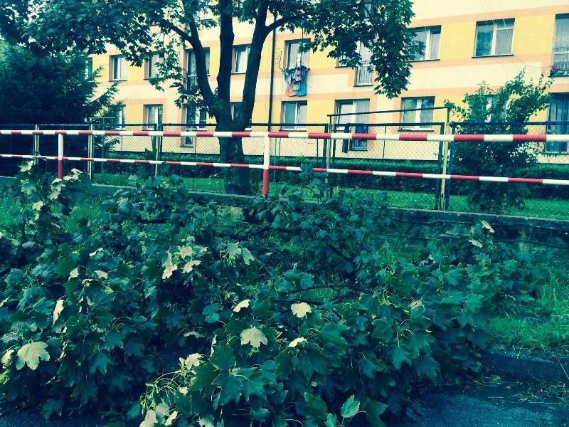 Drzewa blokują przejazd lokalnymi drogami /Bartłomiej Paulus /RMF FM