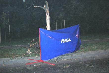 Drzewo, o które rozbił się 22-letek rosło przy samej drodze /Policja