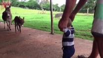 Dwa dzieciaki - osiołek i bobas