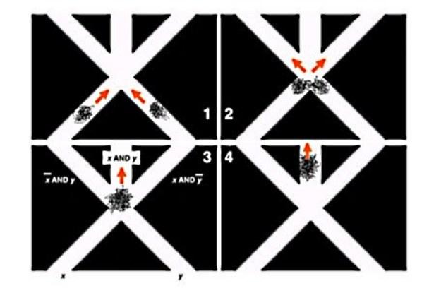 Dwie grupy krabów po spotkaniu (1) mogą albo się rozejść (2), albo podążać w jednym kierunku (3, 4) /materiały prasowe