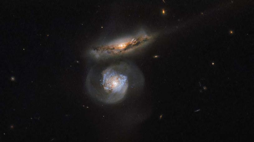 Dwie oddziałujące ze sobą galaktyki NGC 5765A i B, z których ta druga (niebieska) skrywa wewnątrz megamaser /NASA