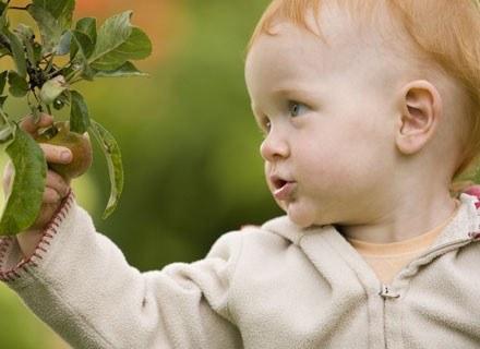 Dzieci alergiczne mają skłonność do częstych, nawracających infekcji dróg oddechowych /© Panthermedia