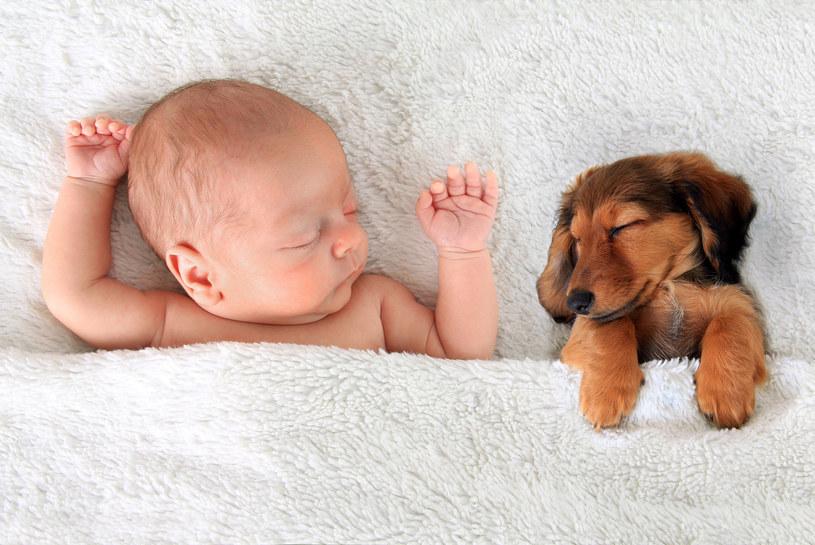 Dzieci wychowywane ze zwierzętami są mniej narażone na choroby cywilizacyjne /123RF/PICSEL
