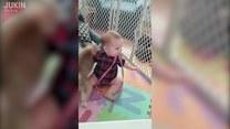 Dziecko i szczeniak - przyjaźń międzygatunkowa