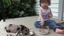 Dziecko przejęło nawyki od świnki