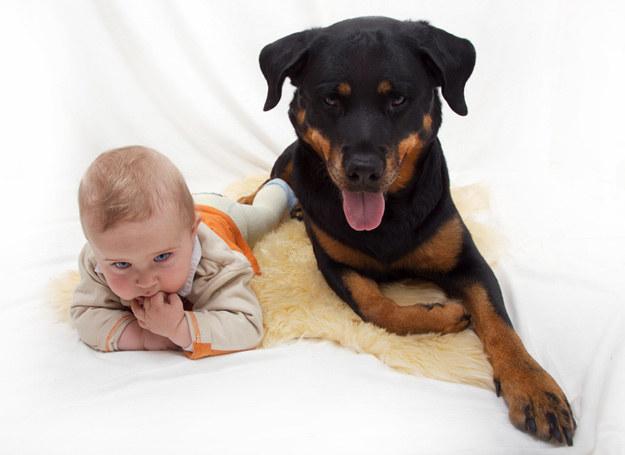 Dziecko przy psie lepiej się rozwija /© Panthermedia
