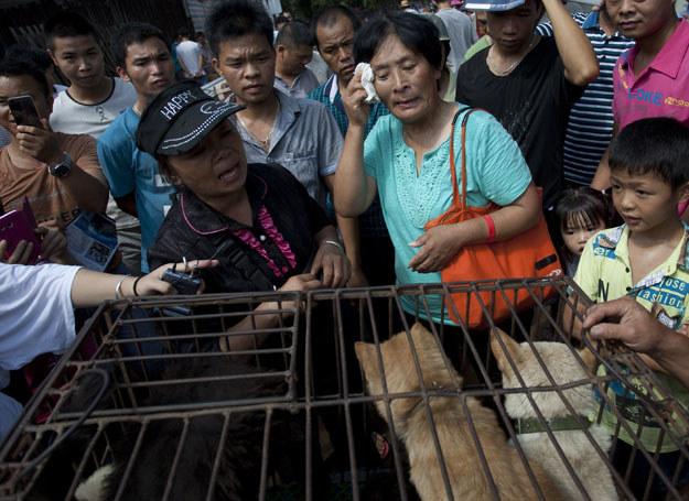 Dzięki niej 100 psów nie trafi na talerze /AFP