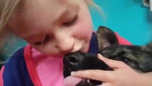 Dziewczynka myje wilczurowi zęby