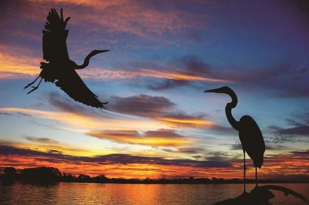 Dzika, wciąż niedostępna natura to królestwo ptaków i ornitologów. Mają tu wymarzone warunki. Cywilizacja, niestety, jest coraz bliżej. /Arch/123RF Picsel