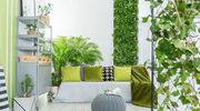 Dżungla w domu? Starannie dobieraj rośliny