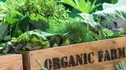 Eco, bio, organic... Z czym to się je?