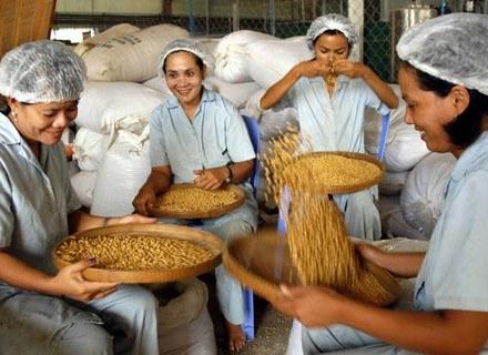Efekt działania soi widoczny jest zwłaszcza w krajach azjatyckich. /AFP
