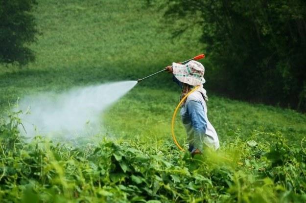 EFSA ostrzega: neonikotynoidy są szkodliwe /123RF/PICSEL