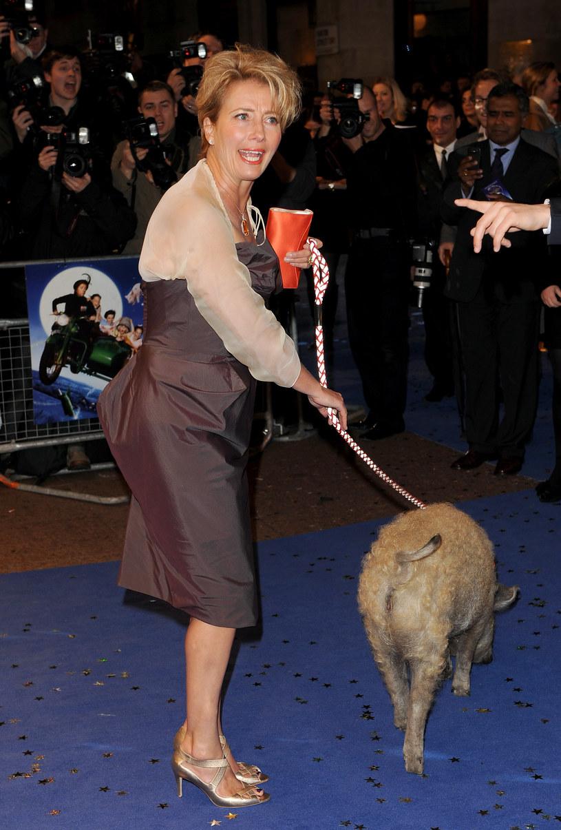 Emma na czerwonym dywanie pojawiła się… ze świnką na smyczy  /Getty Images/Flash Press Media