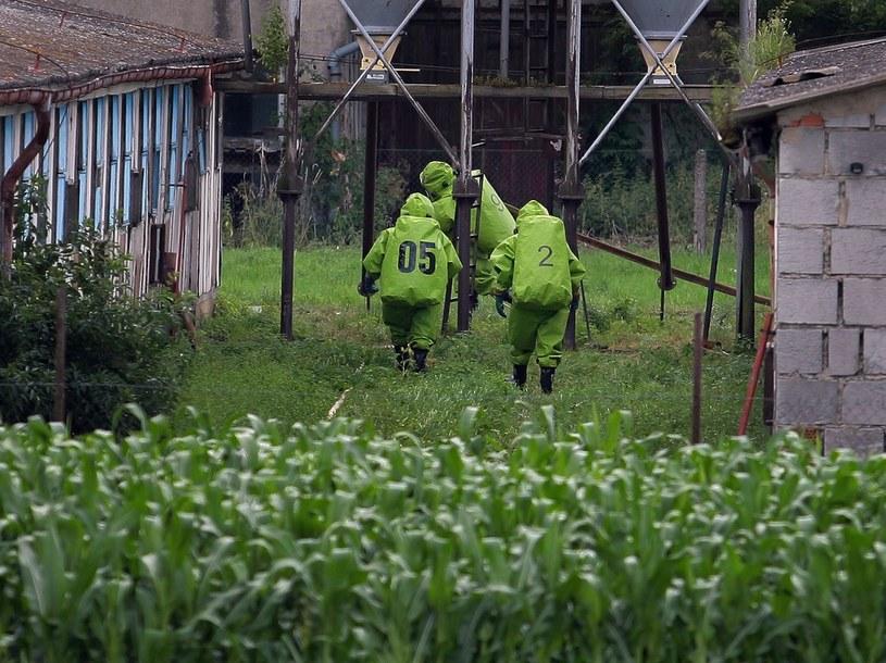 Epidemiolodzy wykryli ognisko ptasiej grypy w Czechach /Maciej Kulczyński /East News