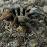 Facebook może pomóc w odkrywaniu nowych gatunków pająków