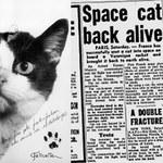 Félicette, pierwsza kotka w kosmosie, będzie miała swój pomnik?