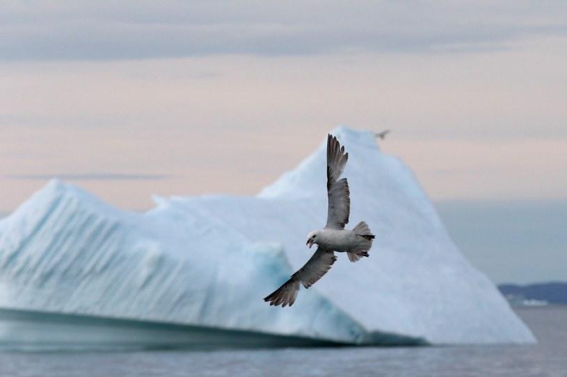 Fotografowanie w Arktyce wymaga zarówno odpowiedniego sprzetu, jak i umiejętności Fot. Thorsten Milse /materiały prasowe