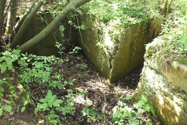 Fragment fundamentu znajdujący się na terenie dawnego obozu RAD w Lwówku Śl. /Odkrywca