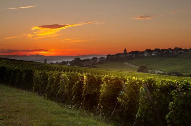 Francja słynie z największej liczby winnic w całej Europie /123RF/PICSEL