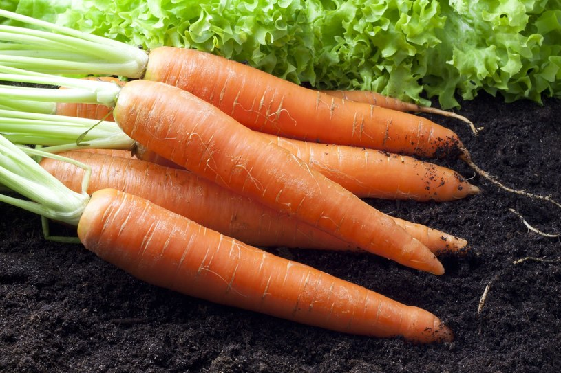 Frutarianie nie jedzą marchewki czy sałaty /©123RF/PICSEL