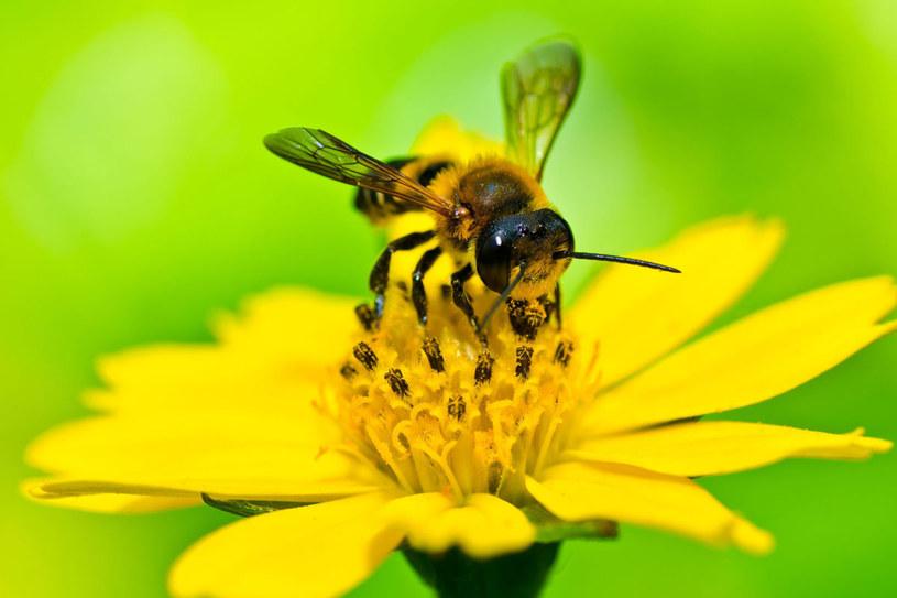 Gdy ukąsi owad, trzeba zachować szczególną ostrożność /123RF/PICSEL