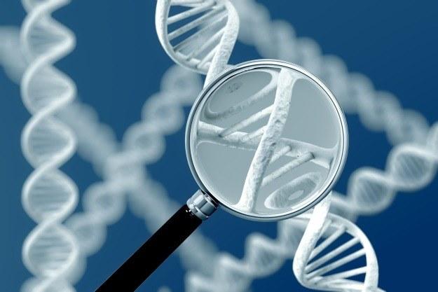 Genetyczne złośliwe oprogramowanie może być pożyteczne /©123RF/PICSEL