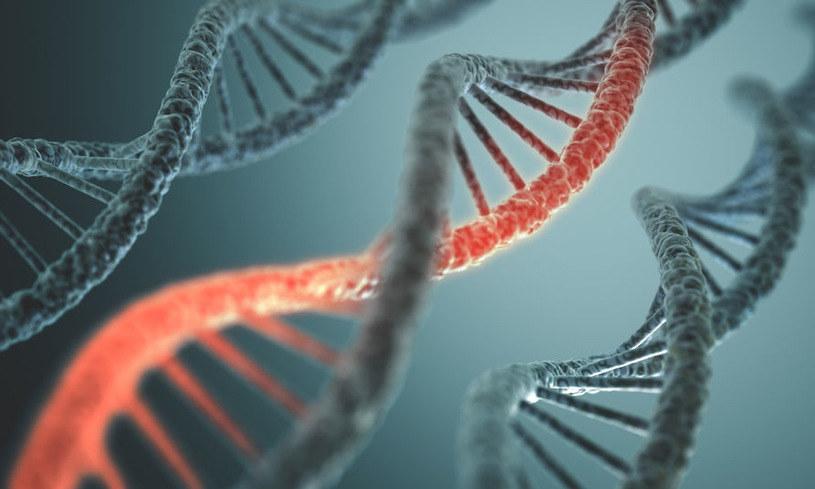 """Genu, który pomógł naszym przodkom przetrwać okres chłodniejszych temperatur poprzez """"kodowanie"""" krótszych kończyn /©123RF/PICSEL"""