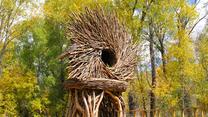 Gigantyczne, drewniane gniazda. Tak, to robota człowieka!