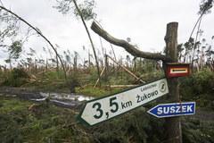 Gigantyczne straty w polskich lasach po nawałnicy